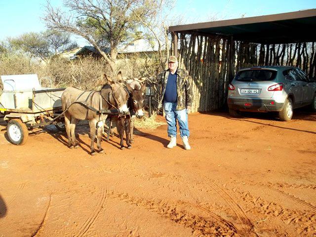 Helpful Donkeys