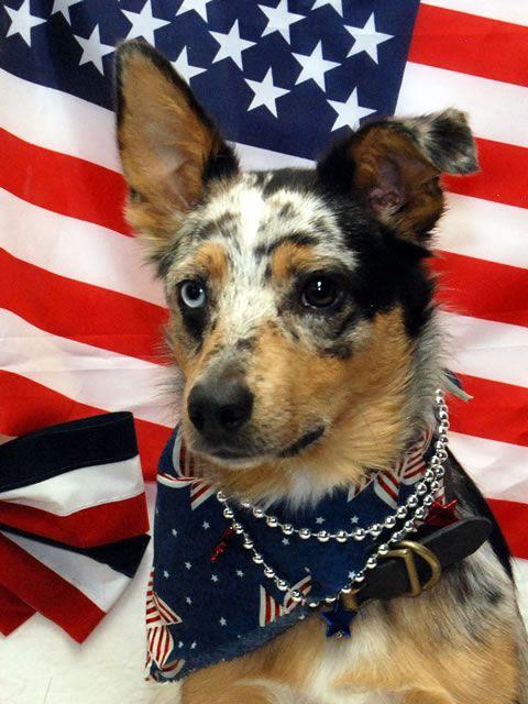 5-patriotic-filson